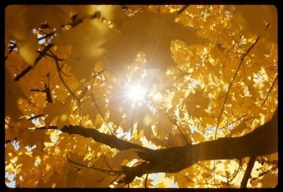 Sunburst in autumn tree, Indiana